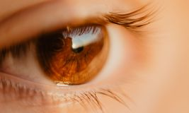 Close-up Photo of Unpaired Brown Eye Stock Photo