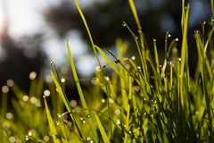 Close-up Photo of Water Dew on Green Grass stock photo