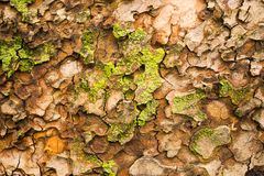 Close-up photo of weathered tree trunk. Old bark pattern Stock Image