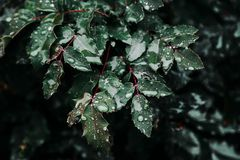 Close-Up Photo of Wet Leaves royalty free stock photos
