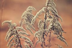 Close Up Photo of White and Brown Plant Stock Images