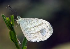 A white butterly on a stem stock photos