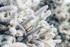 Close Up Photo of White and Grey Plant Royalty Free Stock Photos
