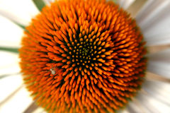 Close up photo of white lovely. Garden flower Royalty Free Stock Photography