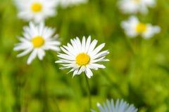 Close Up Photo of White Petal Flower Stock Image