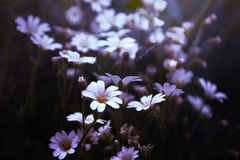 Close Up Photo of White Petaled Flower Royalty Free Stock Photography