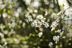 Close Up Photo of White Petaled Flower during Daytime Royalty Free Stock Images