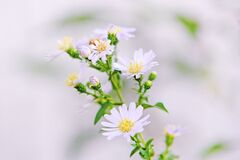 Close Up Photo of White Petaled Flower With Yellow Stigma Royalty Free Stock Photography