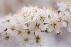Close-up Photo Of White Petaled Flowers Stock Image