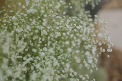 Close-up Photo of White Petaled Flowers Royalty Free Stock Image