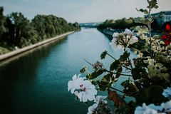 Close-up Photo of White Petaled Flowers Near Body of Water royalty free stock photo