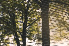 Close up photo of window blinds half open/shut. Beautiful lights with nature and city details showing in background. Dirty window. royalty free stock photography