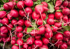 Close up photograph of Fresh Radish Royalty Free Stock Image