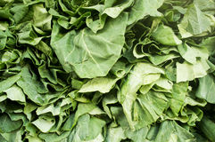 Close up photograph of Fresh Spinach Stock Images