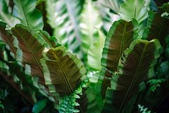 Close-up Photograph of Green Leafed Plant stock photo