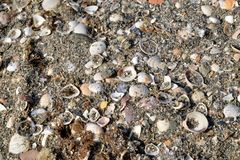 Sand and pebbles on the beach. stock image
