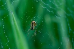 Fresh countryside and morning dew on spiders web royalty free stock image