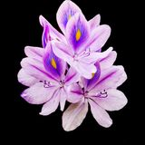 Blossom purple. Close up photography Royalty Free Stock Photo