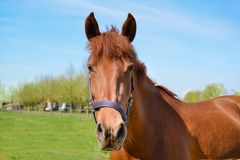 Close-Up Photography of Brown Horse royalty free stock photography