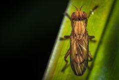 Close-up Photography of Brown Insect Perching on Green Leaf Royalty Free Stock Photo