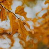 Close-Up Photography of Brown Leaves Royalty Free Stock Photos