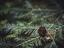 Close-Up Photography of Brown Pine Cone on Green Leaves Stock Photos