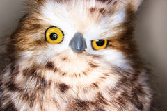Close Up Photography of Brown White Owl Royalty Free Stock Images