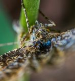Close-up Photography of Brown Winged Insect on Leaf Stem Royalty Free Stock Image