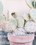 Close Up Photography of Cactus Plant in Clay Plant Pot Royalty Free Stock Image