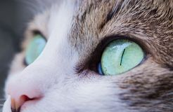 Close Up Photography of Cat's Eye Royalty Free Stock Photography