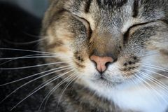 Close-Up Photography of a Cat Sleeping Royalty Free Stock Photography