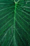 Close-up Photography of Dewdrops on Leaf Royalty Free Stock Photo