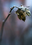 Dried  flower. A close up photography of a dried  flower Stock Photo