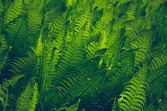 close-Up Photography of Fern Stock Image