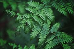 Close-Up Photography of Fern Leaves Stock Photography