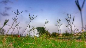 Close-up Photography of Grass Stock Photo