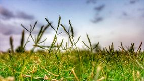 Close-up Photography of Grass Stock Images