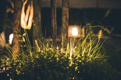 Close-up Photography of Grass at Night Stock Images
