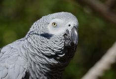 Close Up Photography of Gray Bird during Daytime Stock Photography