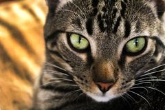 Close-up Photography of Gray and Black Cat Royalty Free Stock Photography