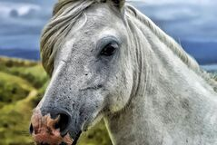 Close Up Photography of Gray and White Horse Stock Photo