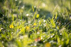 Close-up Photography Of Green Grass Stock Image
