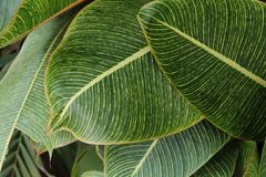 Close-Up Photography of Green Leaves Stock Image