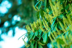 Close-Up Photography of Green Leaves Royalty Free Stock Photo