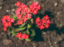 Close-up Photography of Kalanchoe Flowers stock images