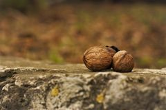 Close-Up Photography of Nuts on Ground Stock Photos