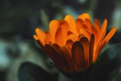 Close-Up Photography of Orange Flower stock images