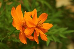 Close-Up Photography of Orange Flowers Stock Image
