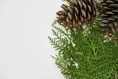 Close-Up Photography of Pine Cones stock photos