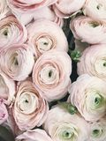 Close-up Photography of Pink Petaled Flowers Royalty Free Stock Image